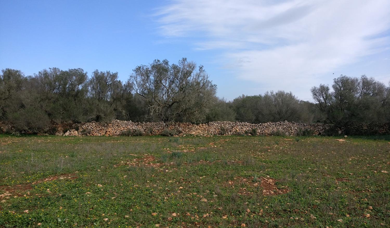 Ein eigener Wald