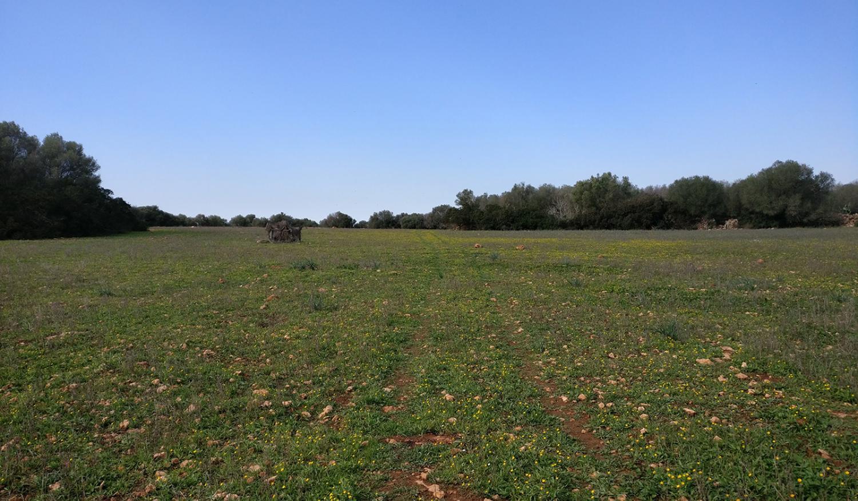 Ein eigener Wald bei Llucmajor