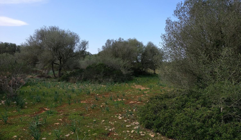 Grundstück mit eigenem Wald